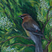 Cedar Waxwing In Lilac Art Print