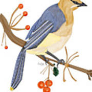 Cedar Waxwing In The Berries Art Print