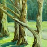 Cedars In Woodward Park Art Print