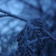 Cedars Of Ice II Art Print