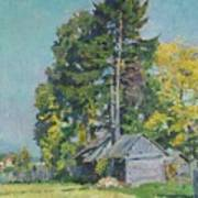 Cedars Art Print