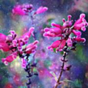 Celestial Blooms-2 Art Print