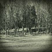 Cemetery In The Woods Art Print