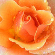 Center Of Orange Rose Art Print