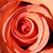 Center Of The Peach Rose Art Print