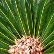 Centered Palm Art Print