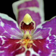Centerpiece - Purple Orchid Macro Art Print