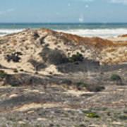 Central Coast Sand Dunes Art Print