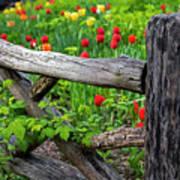 Central Park Shakespeare Garden New York City Ny Wooden Fence Art Print