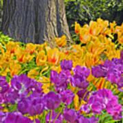 Central Park Tulip Display Art Print