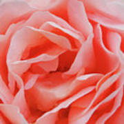 Centre - Rose Art Print