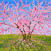 Cercis Tree, Oil Painting Art Print