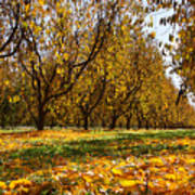 Ceres Orchard - Fall Art Print