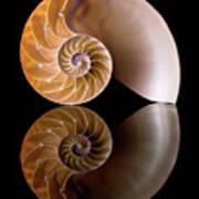 Chambered Nautilus Art Print