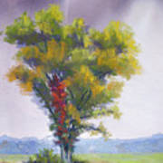 Changing Weather Changing Tree Art Print by Christine Camp