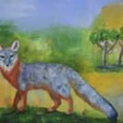 Channel Islands' Island Fox Art Print