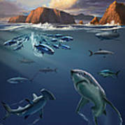 Channel Islands Sharks Art Print