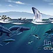Channel Islands Whales Art Print