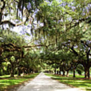 Charleston Oaks 1 Art Print