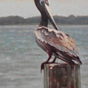 Charleston Pelican Art Print