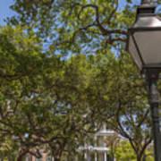 Charleston Through The Tree's Art Print