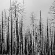Charred Trees Art Print