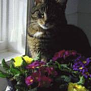Chat Et Fleurs Art Print