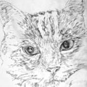 Chat Somnolant Resting Cat Art Print