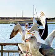 Chatty Seagull Birds Art Print