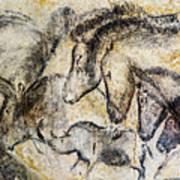 Chauvet Horses Aurochs And Rhinoceros Art Print