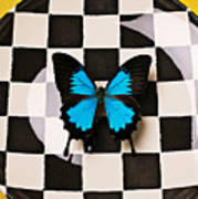 Checker Plate And Blue Butterfly Art Print by Garry Gay