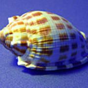 Checkered Helmet Seashell Art Print