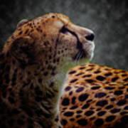 Cheetah Closeup Portrait Art Print