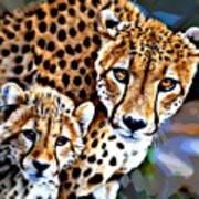 Cheetah Family Art Print