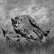 Cheetah Hunting Deer  Art Print
