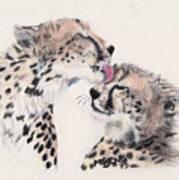 Cheetah Love Art Print