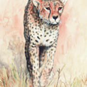 Cheetah Running Art Print