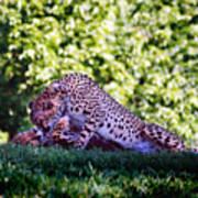 Cheetahs In Love Art Print