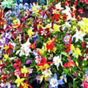 Chelsea Flower Show Art Print
