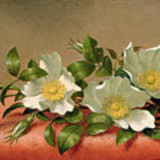 Cherokee Roses Art Print by Martin Johnson Heade