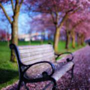 Cherry Blossom Bench Art Print
