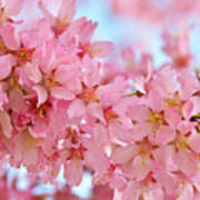 Cherry Blossom Pastel Art Print