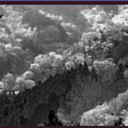 Cherry Blossom Season In Japan Mountain Hills Trees Photography By Navinjoshi At Fineartamerica.com  Art Print