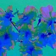 Cherry Blossom Series 2 Art Print by Jen White