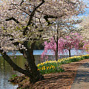 Cherry Blossom Trees Of Branch Brook Park 17 Art Print