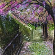 Cherry Blossom Walk Art Print