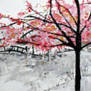 Cherry Blossoms And Bridge Meadowlark Botanical Gardens 201728 Art Print