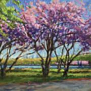 Cherry Blossoms, Central Park Art Print