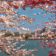 Cherry Blossoms On The Edge Of The Tidal Basin Three Art Print by Susan Isakson