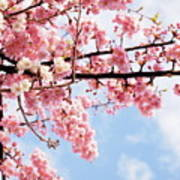 Cherry Blossoms Under Blue Sky Art Print by Neconote